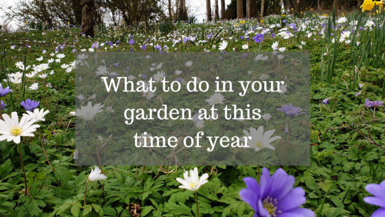 What to do in your garden at this time of year
