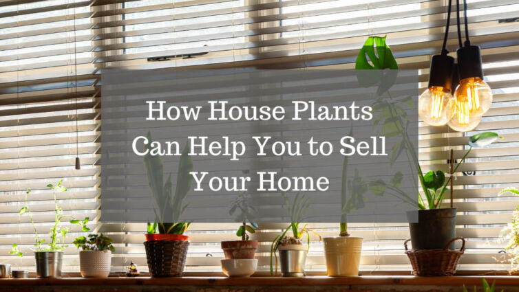 How House Plants Can Help You to Sell Your Home